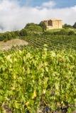 Vineyard near Montalcino, Italy Stock Photos