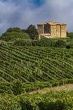 Vineyard near Montalcino, Italy Stock Images