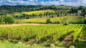 Vineyard near Montalcino in Tuscany Royalty Free Stock Images