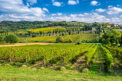 Vineyard near Montalcino in Tuscany Stock Image