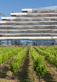 Vineyard near Montpellier (France) Royalty Free Stock Photography