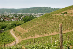 Vineyard near the oldest german city Trier. Since around 2.000 years here vine grows in old roman tradition stock photos