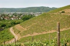 Vineyard near the oldest german city Trier stock photos