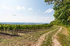 Vineyard near Palava, czech national park, wine agriculture and farming, nature landscape in summer, blue sky.  Stock Image