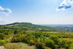 Vineyard near Palava, czech national park, wine agriculture and farming, nature landscape in summer, blue sky.  Stock Photography