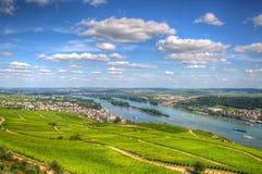 Vineyard, Ruedelsheim, Hessen, Germany Royalty Free Stock Photos