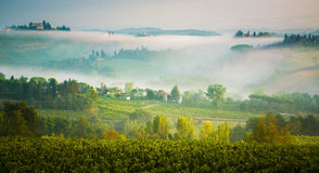 Vineyard near san gimignano Tuscany. Royalty Free Stock Photo