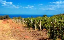 Vineyard near sea(Crimea , Ukraine) Stock Image