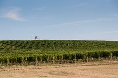 Vineyard near small village, blue sky, agriculture and wine. Vineyard near small village, blue sky, agriculture and the wine Royalty Free Stock Photos