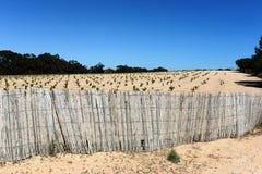 Vineyard near town of Torrevieja. Stock Image