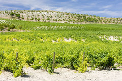 Vineyard near Villabanez Royalty Free Stock Photography
