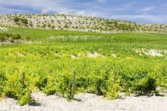 Vineyard near Villabanez Royalty Free Stock Photography
