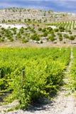 Vineyard near Villabanez Stock Photo