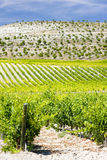 Vineyard near Villabanez Royalty Free Stock Images