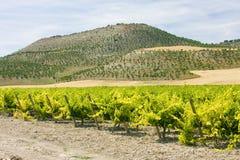Vineyard near Villabanez Royalty Free Stock Photos