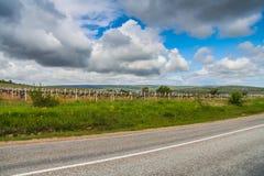 Vineyard near the village of Balaklava Stock Photography