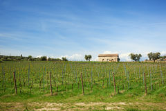 Vineyard with new vines and rustic building Stock Image