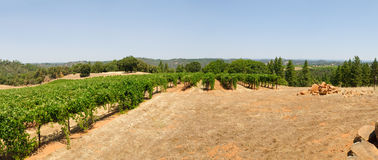 Vineyard in Northern california Stock Photos