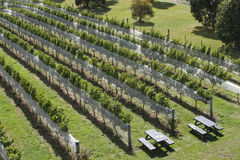 Vineyard NZ Royalty Free Stock Photo