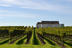 Vineyard with Old Barn Royalty Free Stock Photography