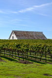 Vineyard with Old Barn Stock Image
