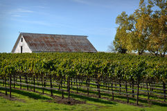 Vineyard with Old Barn Stock Images