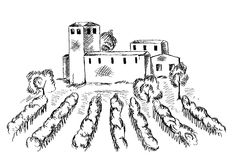 Vineyard and old building Royalty Free Stock Photo