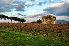 Vineyard with an old country house during sunset Stock Images