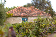 Vineyard with old farm house ruin in the Autumn Stock Photos