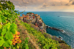 Vineyard and old town of Manarola,Italy,Europe Royalty Free Stock Photos
