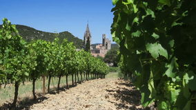 Vineyard at old village with green grapes in the sun stock video footage