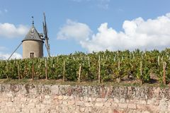 Vineyard with old windmill in Moulin a Vent, Beaujolais Stock Image