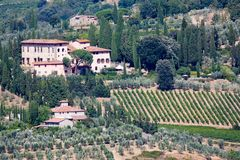 Vineyard and olive trees royalty free stock images