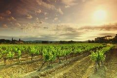 Vineyard. Orange Sky over Green Vineyard stock photos