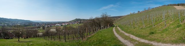 Vineyard and orchards with blue sky as panorama. In spring Royalty Free Stock Image