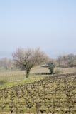 Vineyard outside Bonnieux Village, Provence. France, Europe Royalty Free Stock Image
