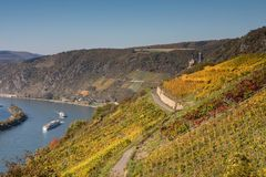 Vineyard over the Rhine valley. Germany royalty free stock photos