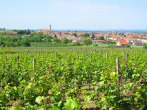 Vineyard over town Royalty Free Stock Image