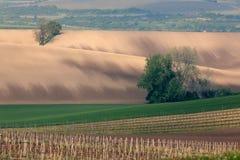 Vineyard over town Velke Bilovice, South Moravia, Czech republic Stock Photos