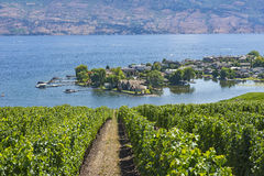 Vineyard Overlooking Okanagan Lake Kelowna BC Canada Stock Photos