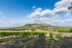 Vineyard at Palava at czech republic, national park, wine and agriculture, summer sky with white clouds.  royalty free stock photo