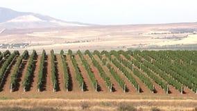 Vineyard. Panorama stock video