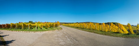 Vineyard panorama in autumn with yellow leaves Royalty Free Stock Photos