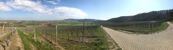 Vineyard panorama in Bavaria in early spring stock photography