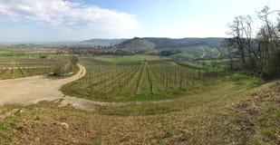 Vineyard panorama in Bavaria in early spring stock photo