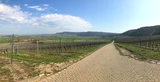 Vineyard panorama in Bavaria in early spring stock images