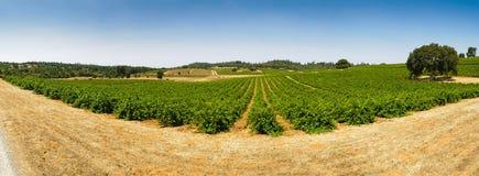Vineyard panorama Royalty Free Stock Photography