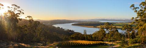Vineyard panorama in Tamar Valley, Tasmania Royalty Free Stock Photography