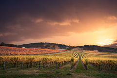 Vineyard Paradise Royalty Free Stock Photos