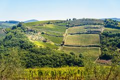 Vineyard in Passignano in Chianti region. Tuscany. Italy. Vineyard in Passignano in Chianti region. Tuscany landscape. Italy royalty free stock images
